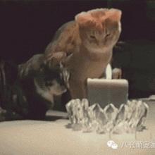 【周刊9.22】吹毛蜡烛,看哥的 !