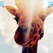 ZigBee vs WiFi,物联网通讯协议哪个赢面大?